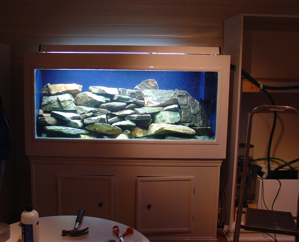 freshwater fish tank setup freshwater fish tank setup
